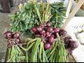 лук семена, лук, лук посева, семена лука